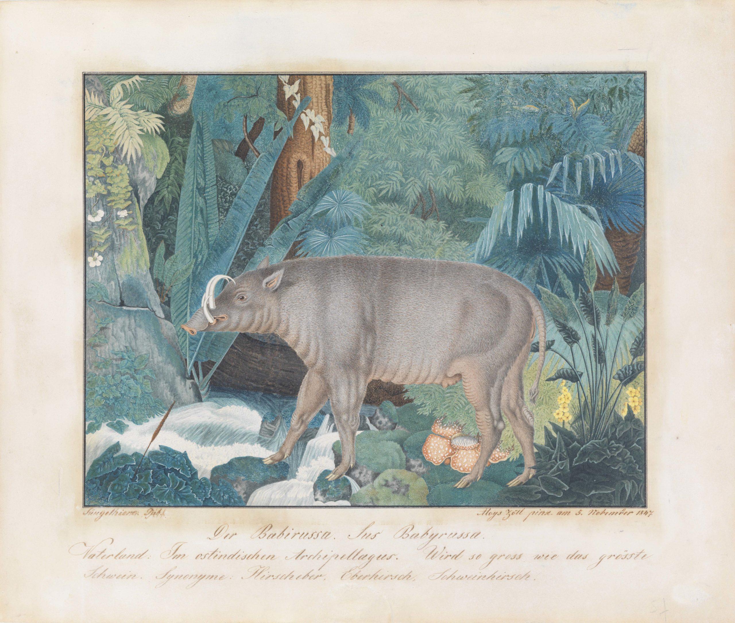 Aloys Zötl, Hirscheber, 1847